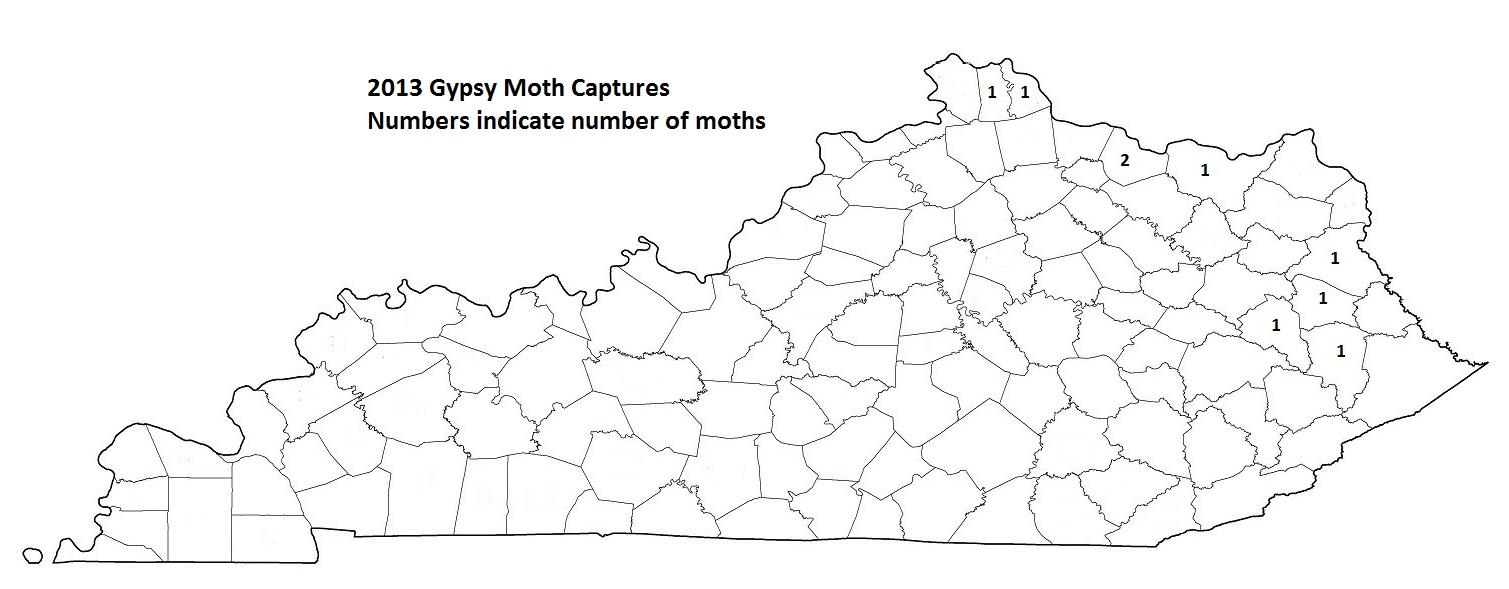 2013 Gypsy Moth Captures in Numbers